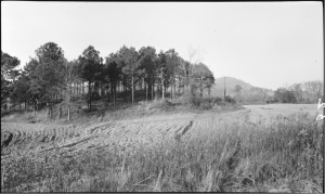 "Figure 4. 1917 Photograph of Mound B, Leake Site (Anonymous 1917). Original caption reads: ""Indian Mound on Leake Property, 4 Mi. S.W. of Cartersville"""